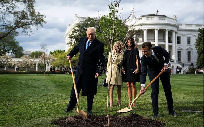 Ông Macron sẽ gửi tặng ông Trump cây sồi mới thay cây đã chết
