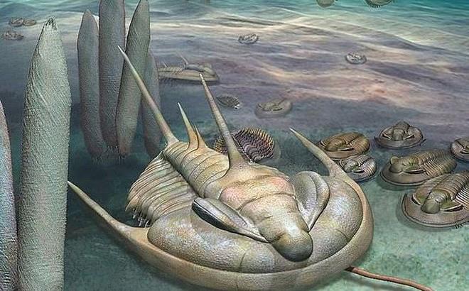 Phát hiện loài 'bọ bạo chúa' có kích thước khổng lồ cách đây 500 triệu năm