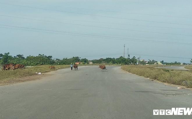 Cận cảnh dự án đường nghìn tỷ đồng dang dở, bỏ hoang, trở thành nơi chăn bò ở Nghệ An