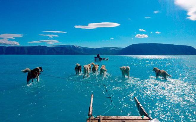 Bức ảnh chó kéo xe trên mặt nước tuyệt đẹp nhưng ẩn chứa sự thật tàn khốc về biến đổi khí hậu