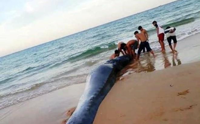 Cá voi dài hơn 5m dạt vào bờ biển Khánh Hòa