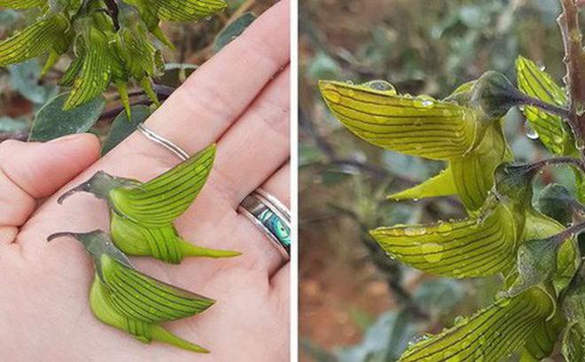 Reddit đang um sùm vì loài cây cho ra hoa giống hệt con chim ruồi!