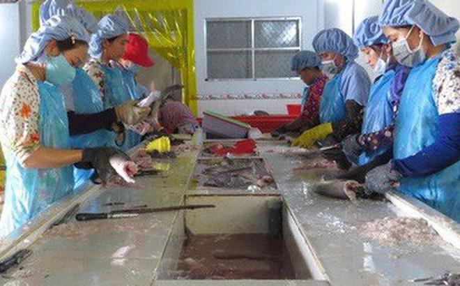 Lạ đời thương lái tranh nhau mua… vảy cá