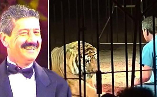 Nhà huấn luyện thú nổi tiếng thế giới bị 4 con hổ vồ chết, đồng nghiệp đứng nhìn 30 phút mà không thể cứu được