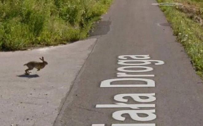 Giật mình với cảnh xe Google đâm phải con thỏ lao qua đường, húc bay cả lên trời cao