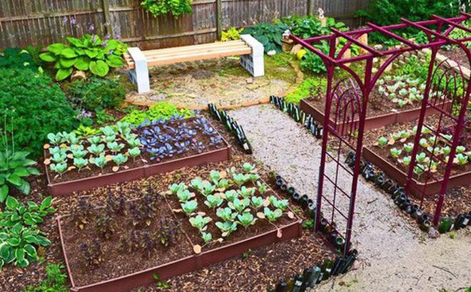 Dù không có nhiều kinh nghiệm trong trồng rau thì với 10 lưu ý dưới đây bạn vẫn có thể sở hữu một vườn rau tươi tốt