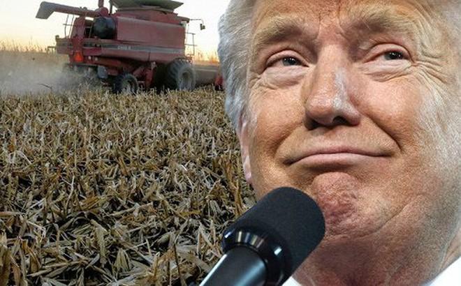 Bị ảnh hưởng nặng nề vì thương chiến với Trung Quốc, nông dân Mỹ dọa không bỏ phiếu cho Tổng thống Trump