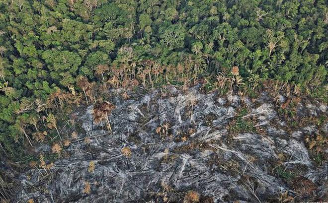 Nếu rừng Amazon biến mất, thế giới mất đi 20% lượng nước ngọt, 20% lượng oxy, con người chịu ảnh hưởng trực tiếp