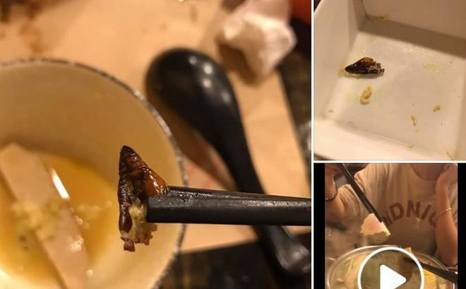 """Cắn phải """"con gián béo ngậy"""" trong nồi lẩu ở nhà hàng Nhật, cô gái hãi hùng đăng đàn nhưng dân mạng có thái độ bất ngờ"""