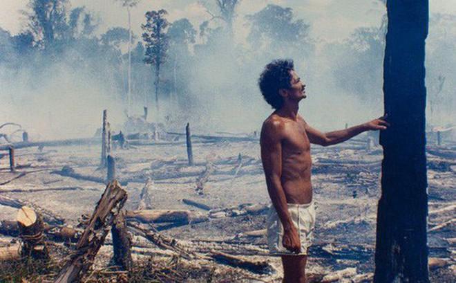 """Trước khi cháy kỷ lục xảy ra, rừng Amazon đã kiên cường chống trả sự xâm lấn của con người chỉ nhờ một """"chiến binh tí hon"""""""