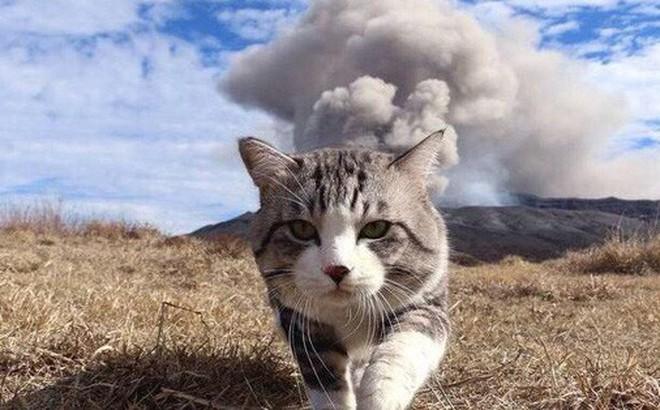 Vào ngày 21 tháng Bảy năm 2019, Bé Tỏi - con mèo nhân bản đầu tiên của Trung Quốc ra đời