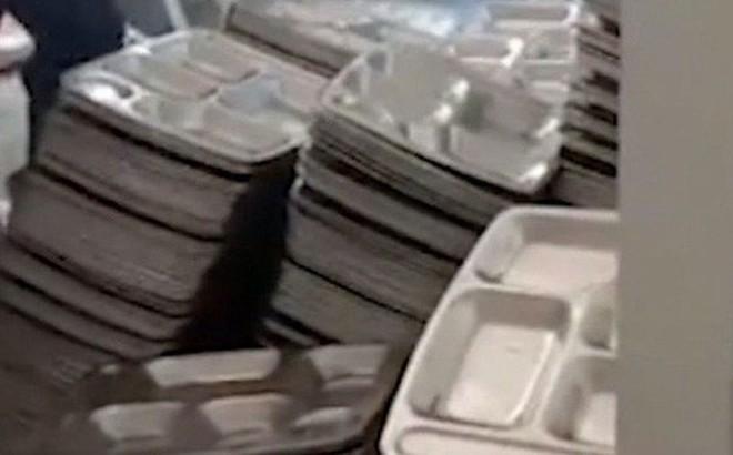 Sa thải hiệu trưởng dùng bột giặt rửa đĩa ăn của học sinh