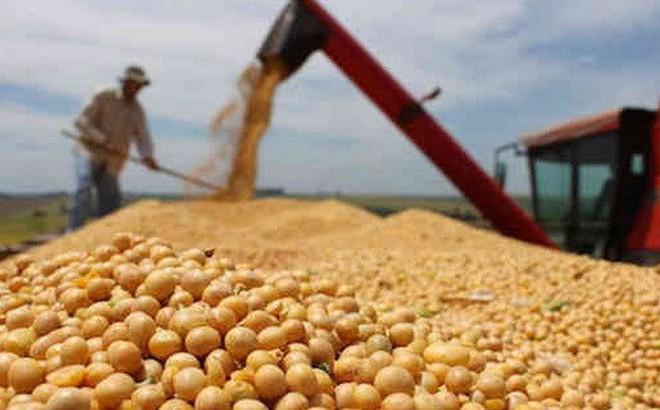 Trung Quốc muốn mua mạnh đậu tương Mỹ, quyết không nhượng bộ quyền lợi cốt lõi