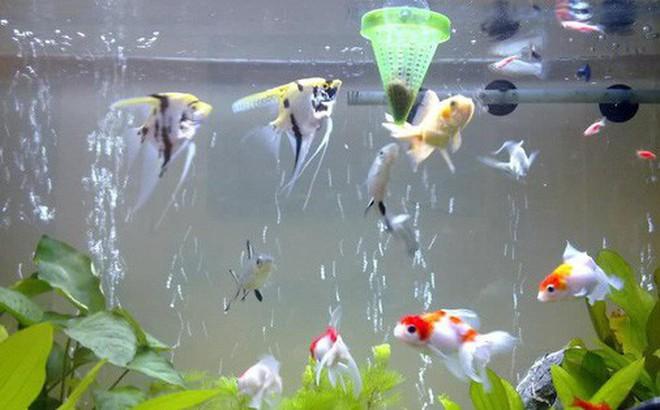 """Câu hỏi """"Bể nước có 10 con cá, 2 con chết, 4 con lặn xuống dưới, hỏi còn mấy con?"""" khiến tất cả câm nín, chỉ một ứng viên trả lời và được mời làm trợ lý tổng giám đốc luôn"""
