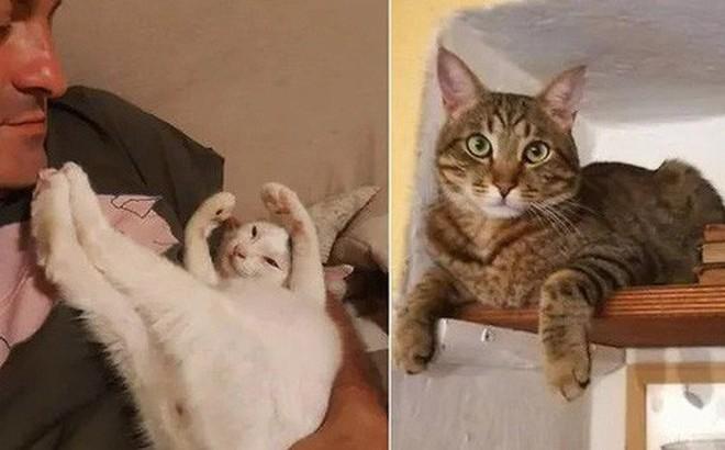 Được 2 'boss' mèo đánh thức, cặp vợ chồng may mắn thoát khỏi tai họa trời giáng