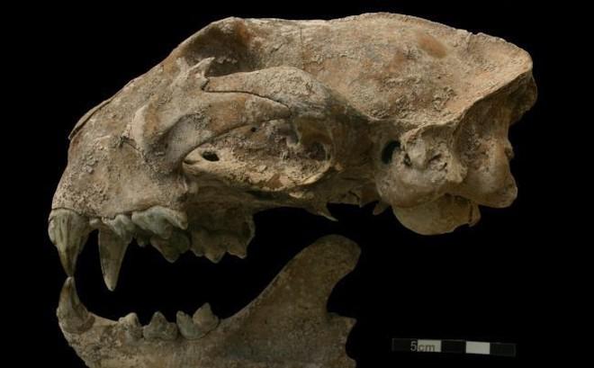 Giải mã bí ẩn loạt động vật chôn cùng cô gái trong mộ cổ Maya