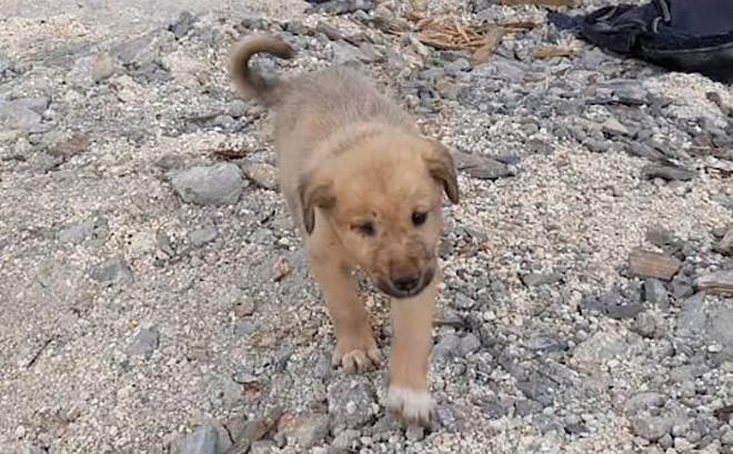 Cảm động cuộc giải cứu chó con mất mẹ sau cuộc đột kích của Mỹ tiêu diệt thủ lĩnh IS