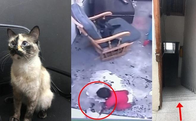 Trong khi mèo nhà bạn chỉ biết nằm ngửa đòi ăn, mèo nhà người ta đã cứu chủ nhân khỏi cái chết trong gang tấc