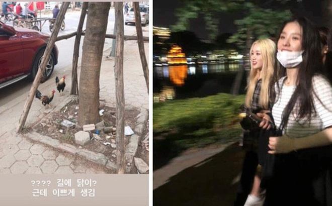 Fangirl Hàn sang Việt Nam 'đu' AAA sốc nặng vì thấy... gà thả rông ngoài đường phố: Lạ lùng nhỉ, ngộ nghĩnh nhỉ!