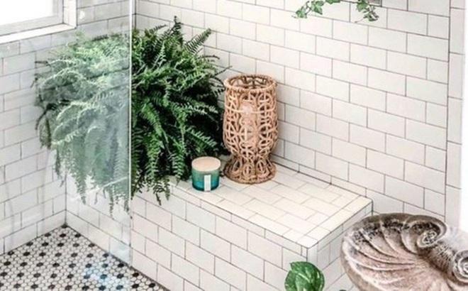 10 loại cây cảnh tốt nhất trồng trong phòng tắm để lấy thêm màu xanh và lọc không khí cho cả nhà