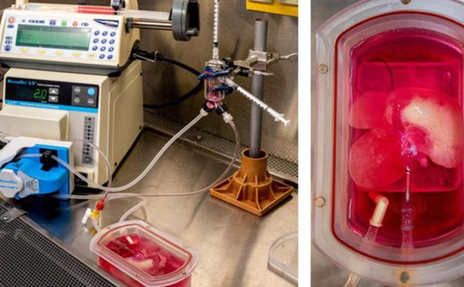 Những lá gan được in 3D sinh học sẽ tạo ra cuộc cách mạng trong lĩnh vực cấy ghép nội tạng