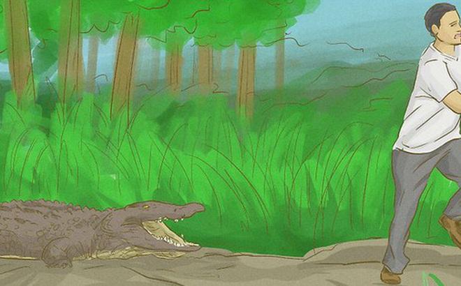 Ai cũng tưởng cá sấu lên bờ là vô hại, nhưng nhìn những hình ảnh sau bạn có nghĩ vậy nữa không?
