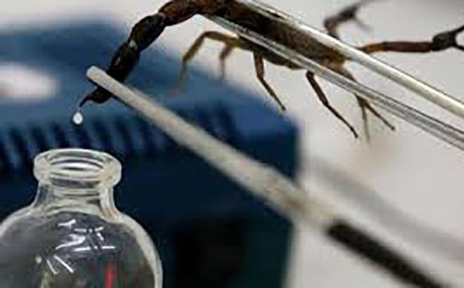 1001 thắc mắc: Vì sao nọc bọ cạp tử thần là chất lỏng đắt nhất hành tinh