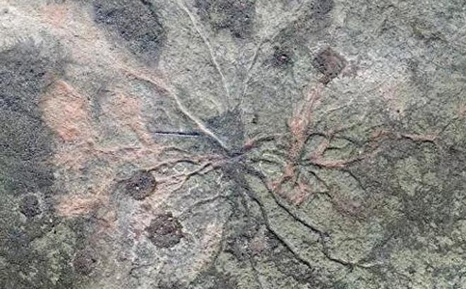Phát hiện khu rừng hóa thạch lâu đời nhất thế giới