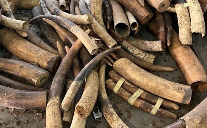 Cận cảnh 2 tấn ngà voi, vảy tê tê châu Phi ngụy trang trong hộp gỗ