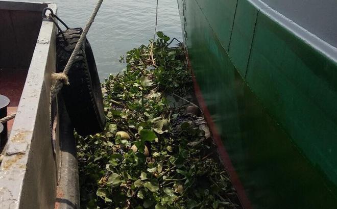 Đi bộ trên bờ sông Sài Gòn, người dân phát hiện thi thể nữ giới đang phân huỷ