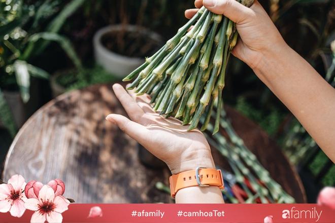 Vừa dễ cắm lại vừa đẹp, hoa cẩm chướng chính là loại hoa không thể thiếu trong ngày Tết - Ảnh 15.
