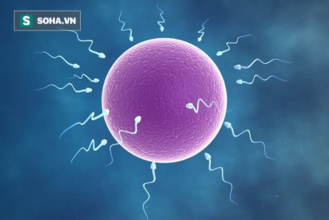 10 sát thủ khiến tỷ lệ sống của tinh trùng giảm: Nam giới nên chú ý ngay từ khi còn trẻ - Ảnh 1.