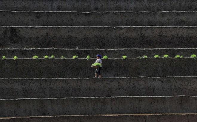 24h qua ảnh: Nông dân Việt Nam cấy lúa trên ruộng bậc thang
