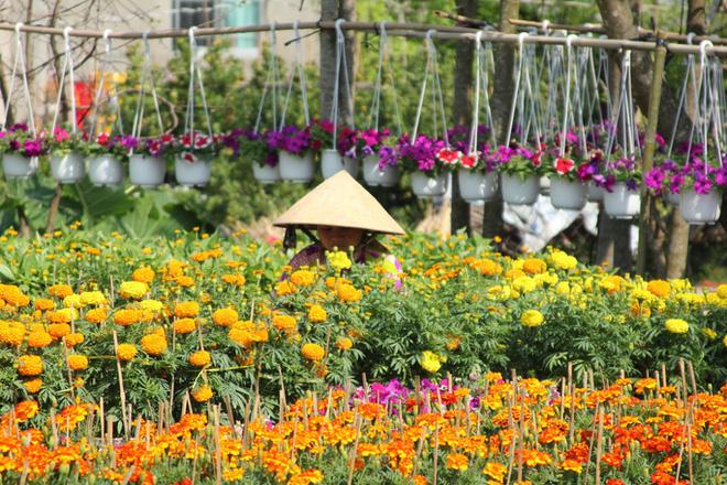 Nhiều chủng loại hoa mới, lạ ở Sa Đéc tấp nập lên phố - Ảnh 11.