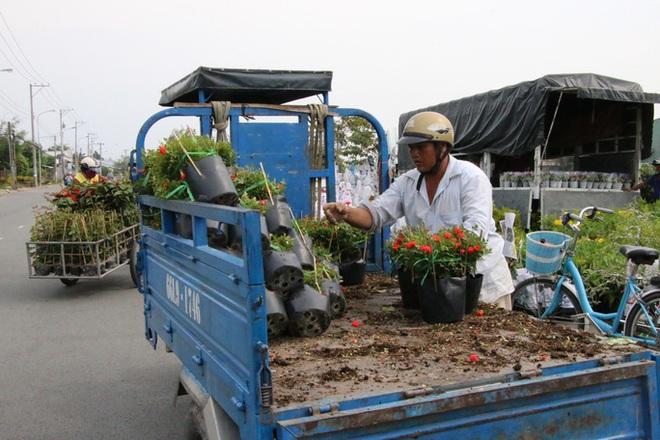 Nhiều chủng loại hoa mới, lạ ở Sa Đéc tấp nập lên phố - Ảnh 14.