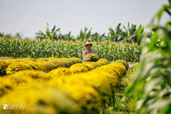 Ngất lịm giữa hàng chục cánh đồng cúc mâm xôi rộng bạt ngàn ở một trong những ngôi làng ăn Tết sớm nhất cả nước - Ảnh 4.