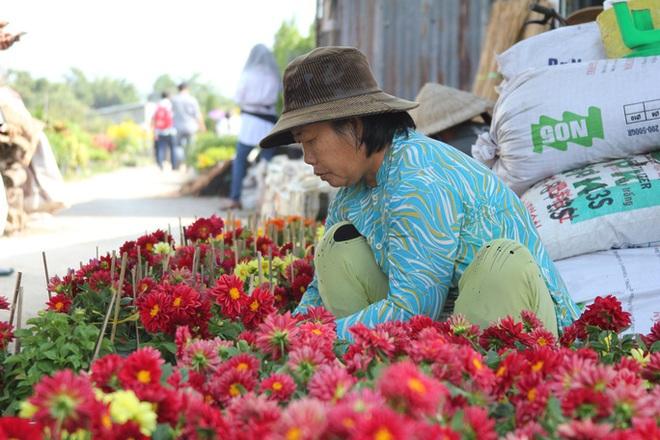 Nhiều chủng loại hoa mới, lạ ở Sa Đéc tấp nập lên phố - Ảnh 9.