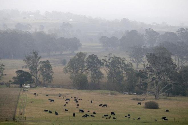 Cháy rừng Úc: Khói lan ra toàn cầu, gây hiện tượng thời tiết lạ  - Ảnh 3.