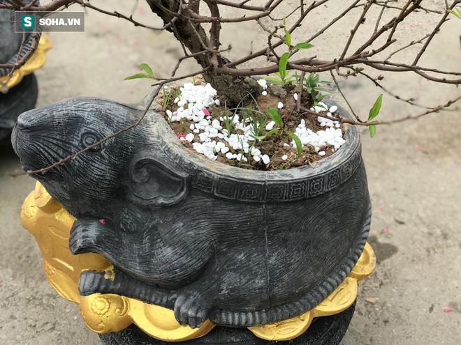 Chuột đen cưỡi vàng cõng hoa đào giá 2 triệu đồng hút khách dịp Tết 2020 - Ảnh 6.