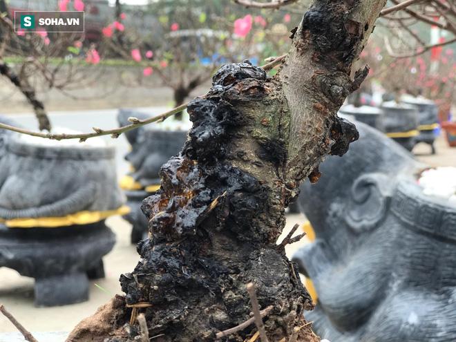 Chuột đen cưỡi vàng cõng hoa đào giá 2 triệu đồng hút khách dịp Tết 2020 - Ảnh 5.