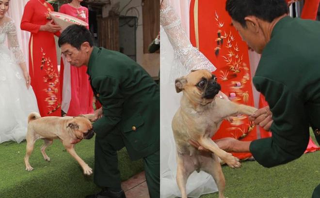 Chú chó lao lên sân khấu đòi chụp ảnh với cô dâu nhưng bị bế xuống, vẻ mặt khiến tất cả không thể nhịn cười