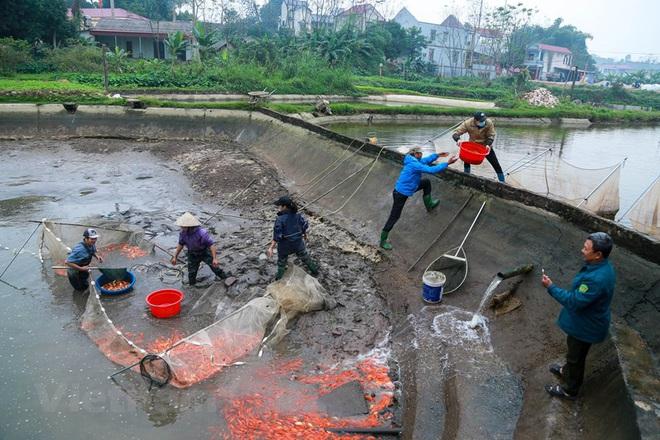 Làng nghề cá chép đỏ Thủy Trầm tất bật trước ngày ông Công ông Táo - Ảnh 1.