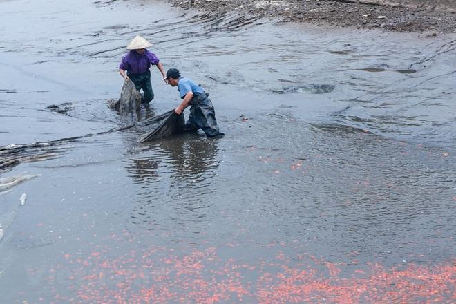 Làng nghề cá chép đỏ Thủy Trầm tất bật trước ngày ông Công ông Táo - Ảnh 2.