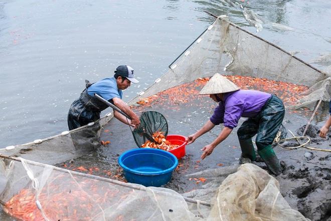 Làng nghề cá chép đỏ Thủy Trầm tất bật trước ngày ông Công ông Táo - Ảnh 11.