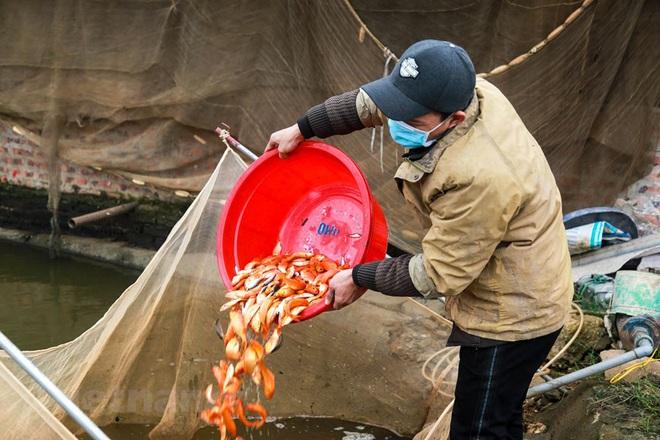 Làng nghề cá chép đỏ Thủy Trầm tất bật trước ngày ông Công ông Táo - Ảnh 16.