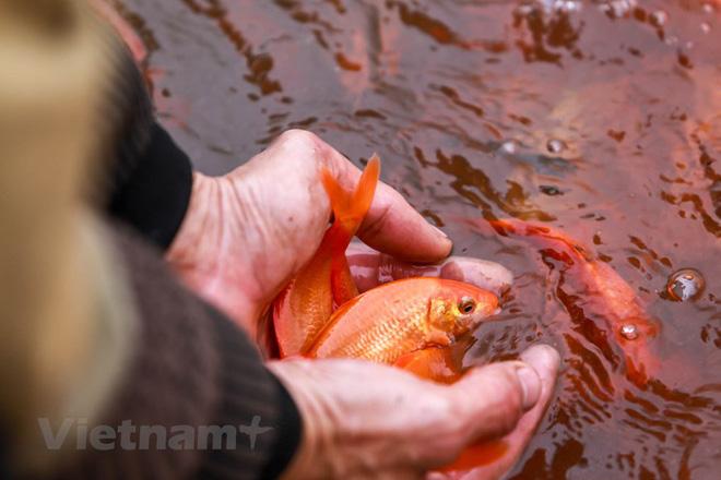 Làng nghề cá chép đỏ Thủy Trầm tất bật trước ngày ông Công ông Táo - Ảnh 17.