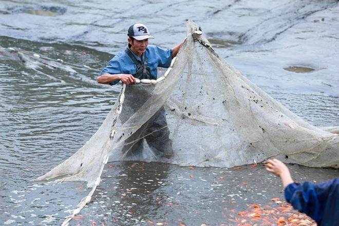 Làng nghề cá chép đỏ Thủy Trầm tất bật trước ngày ông Công ông Táo - Ảnh 4.