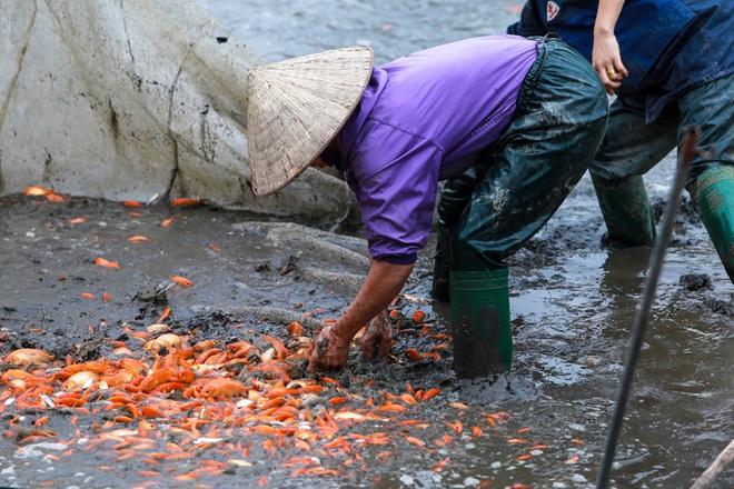Làng nghề cá chép đỏ Thủy Trầm tất bật trước ngày ông Công ông Táo - Ảnh 5.