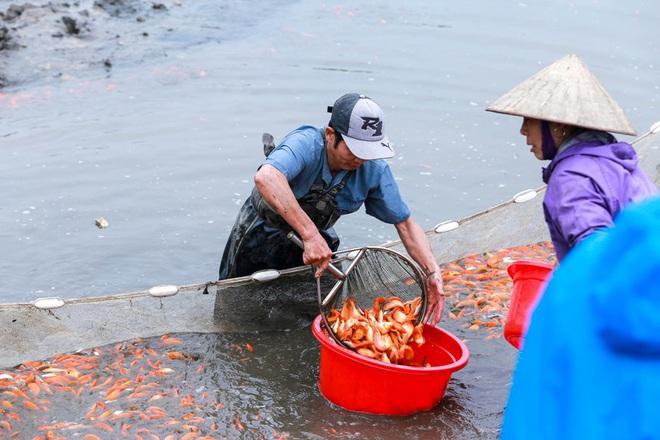 Làng nghề cá chép đỏ Thủy Trầm tất bật trước ngày ông Công ông Táo - Ảnh 7.