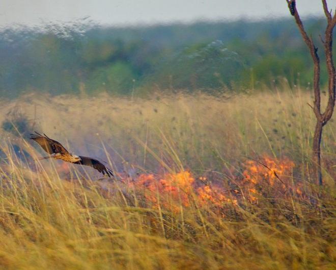 Đây là lý do tại sao những con mèo đang làm cho thảm họa cháy rừng ở Úc thêm tồi tệ - Ảnh 3.